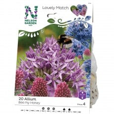 Allium Nelson Garden LM Bee My Honey