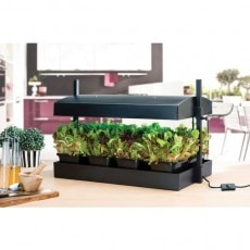 Drivbänk Garland Grow Light Svart